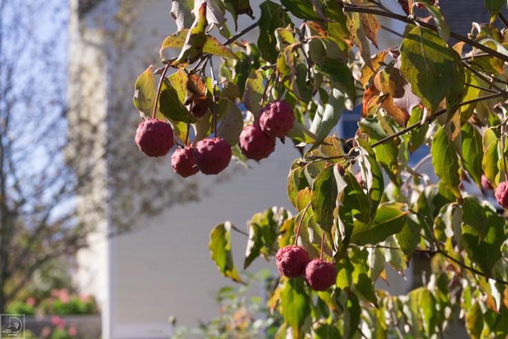 Fall blog-14
