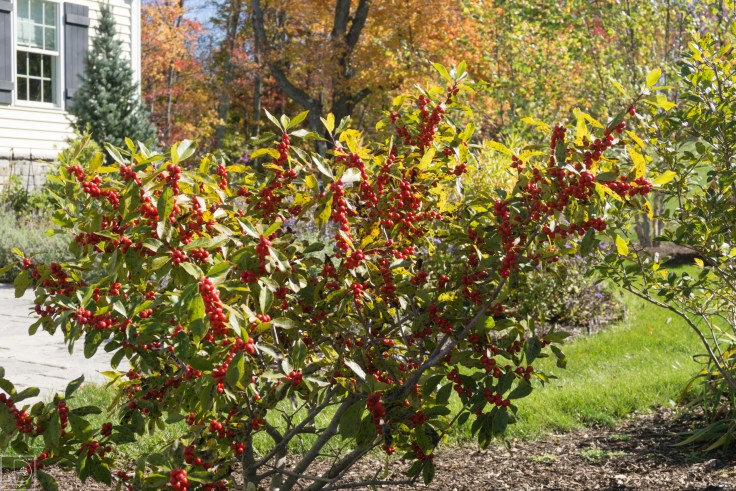 Fall blog-4