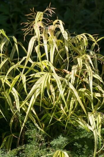 Grasses-9
