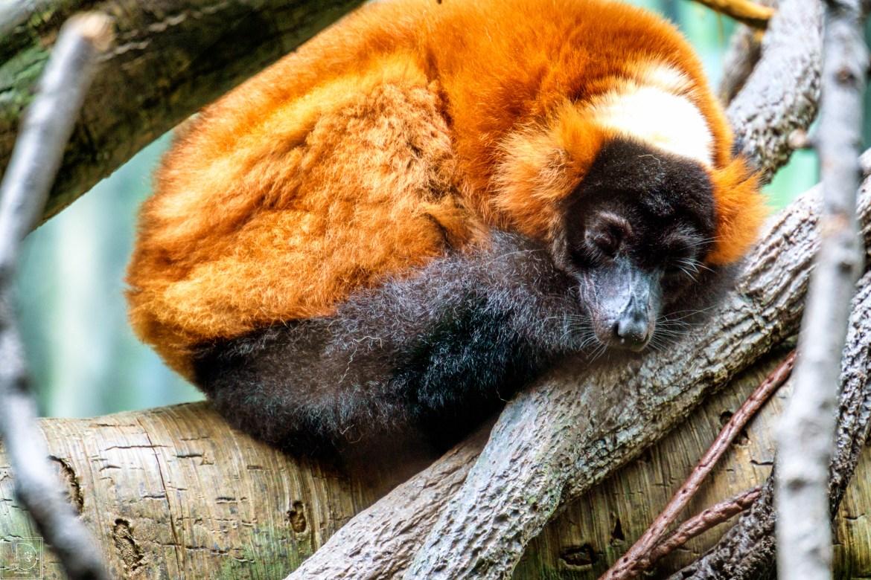 Bronx Zoo-12