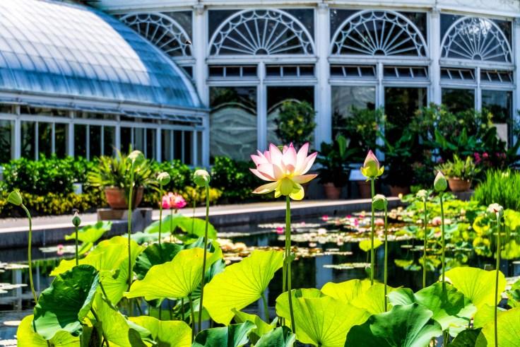 Lotus (1 of 1)