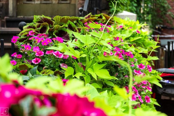 Newberry street planter
