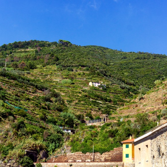 Vernazza vineyards-1