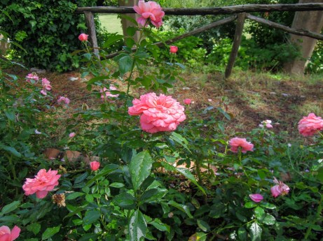 The Rose Garden at Villa Cimbrone