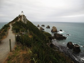 at Nugget Point