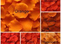 macam macam warna orange