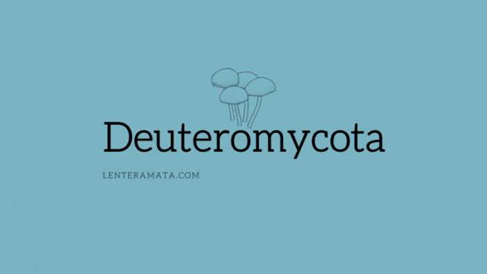 Deuteromycota
