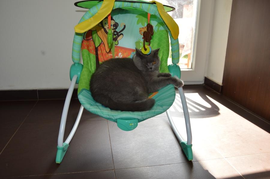 asijské oholil kočička stříkací koření gigi