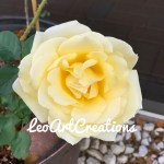 Yellow rose of Florida by Leo Art Creations