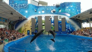 Nemo resort hotel with dolphins show