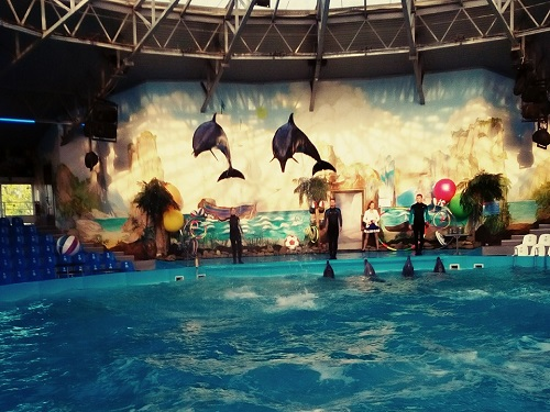 things to do in Odessa Dolphinarium