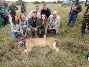 Sponsors bij de verdoofde leeuwin Nina.