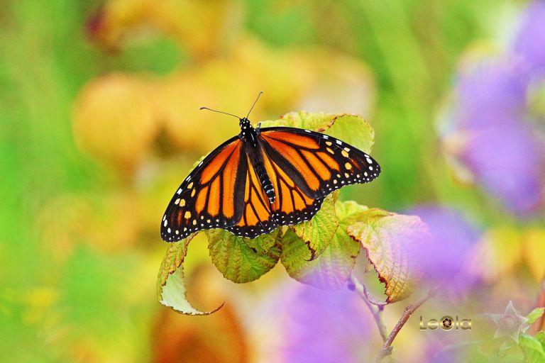 IMG_7469 Butterfly copy