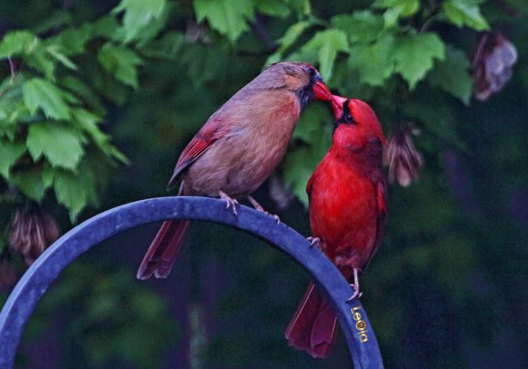 cardinalss-3