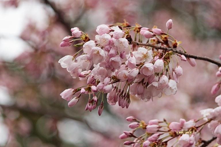 IMG_0268 Blooms copy.jpg