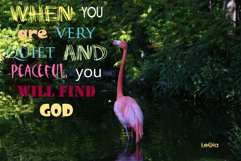 IMG_9773 Flamingo copy