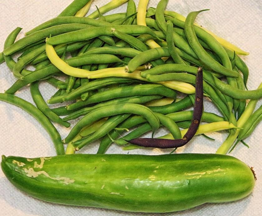 IMG_7705 Beans & Cucumber.JPG