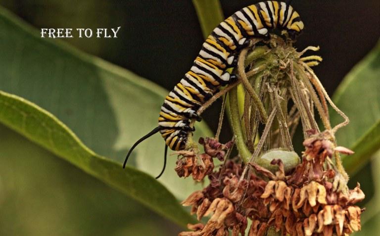 IMG_0351 Caterpillar copy