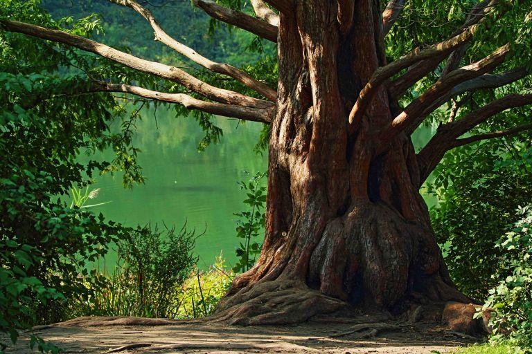 IMG_2390a Tree copy