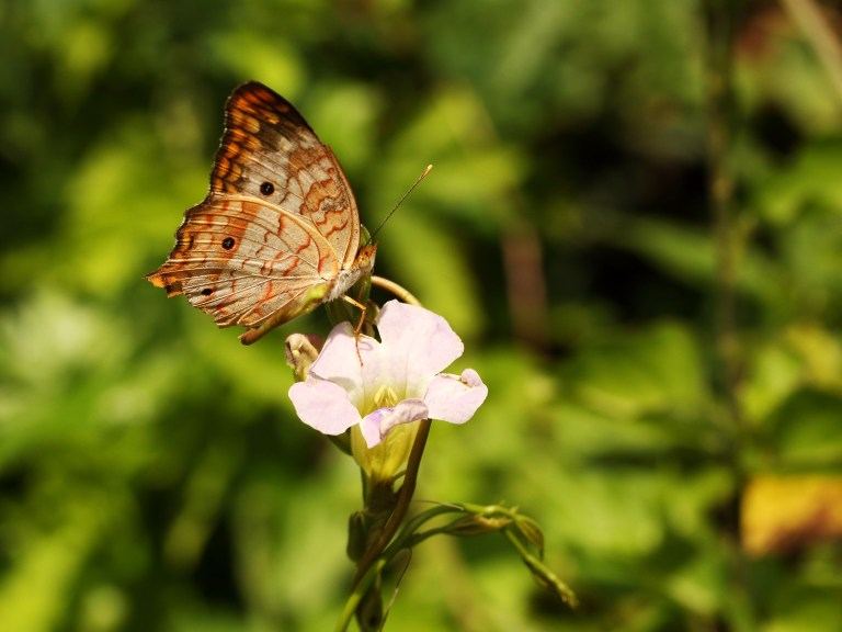 IMG_0332 butterflya.JPG