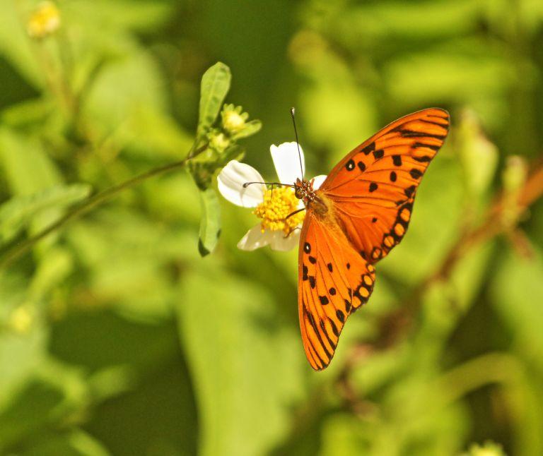 IMG_0362 Butterfly.JPG