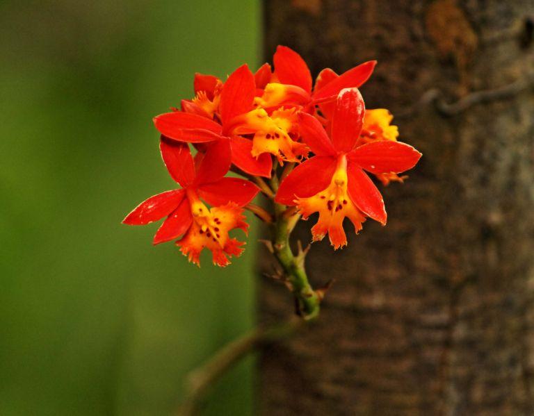 IMG_8872 Flower