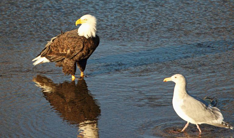 IMG_1882 Eagle.JPG
