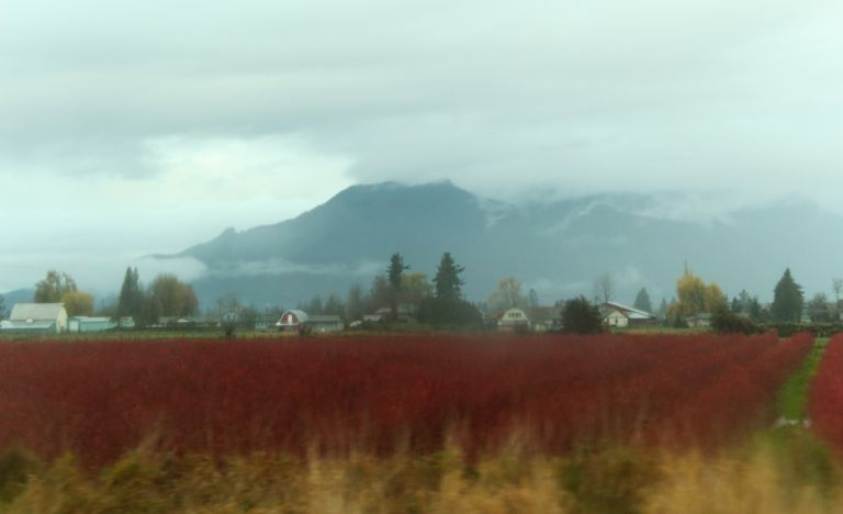 IMG_3581 Fraser Valley