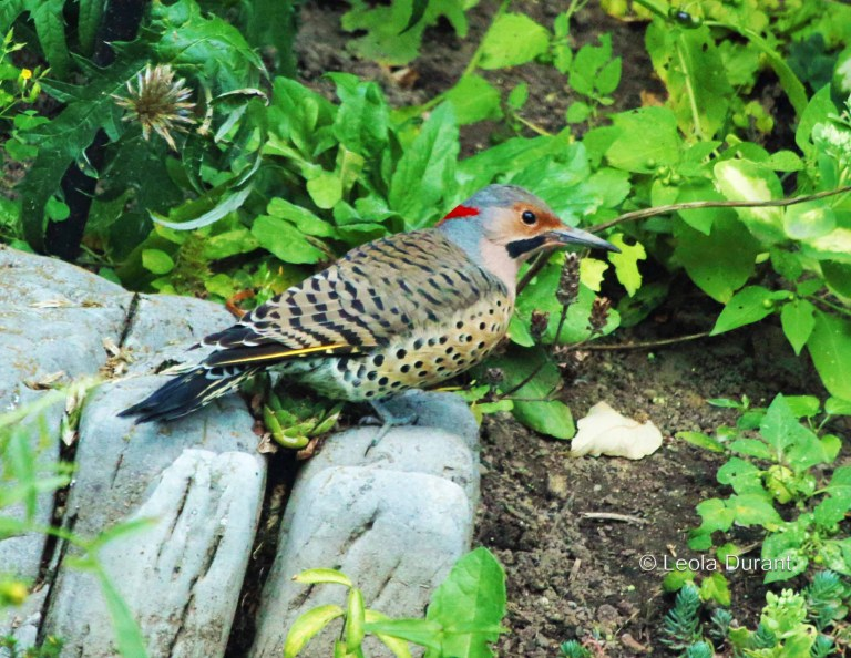 IMG_8449 Flicker 7x5 copy