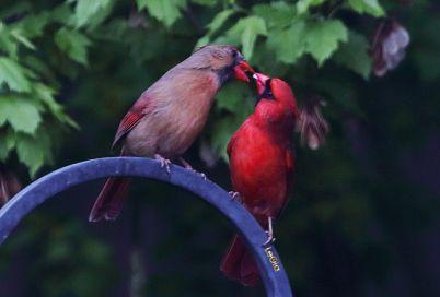 Cardinalss #2