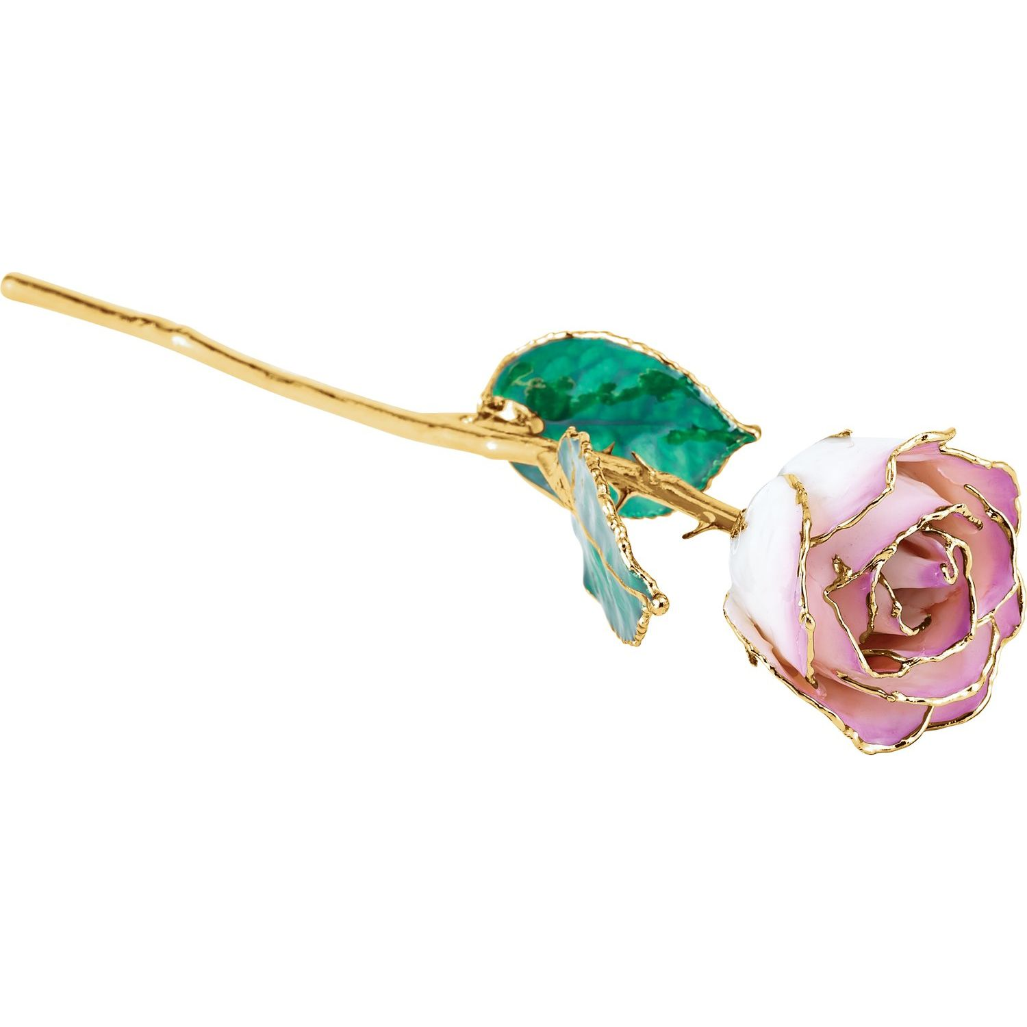 Lacquered Cream Picasso Rose with 24K Gold Trim from Leonard & Hazel™