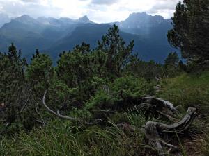 Zuel Cortina - Pini mughi