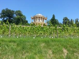 Królewskie winnice oraz belweder na Klausbergu