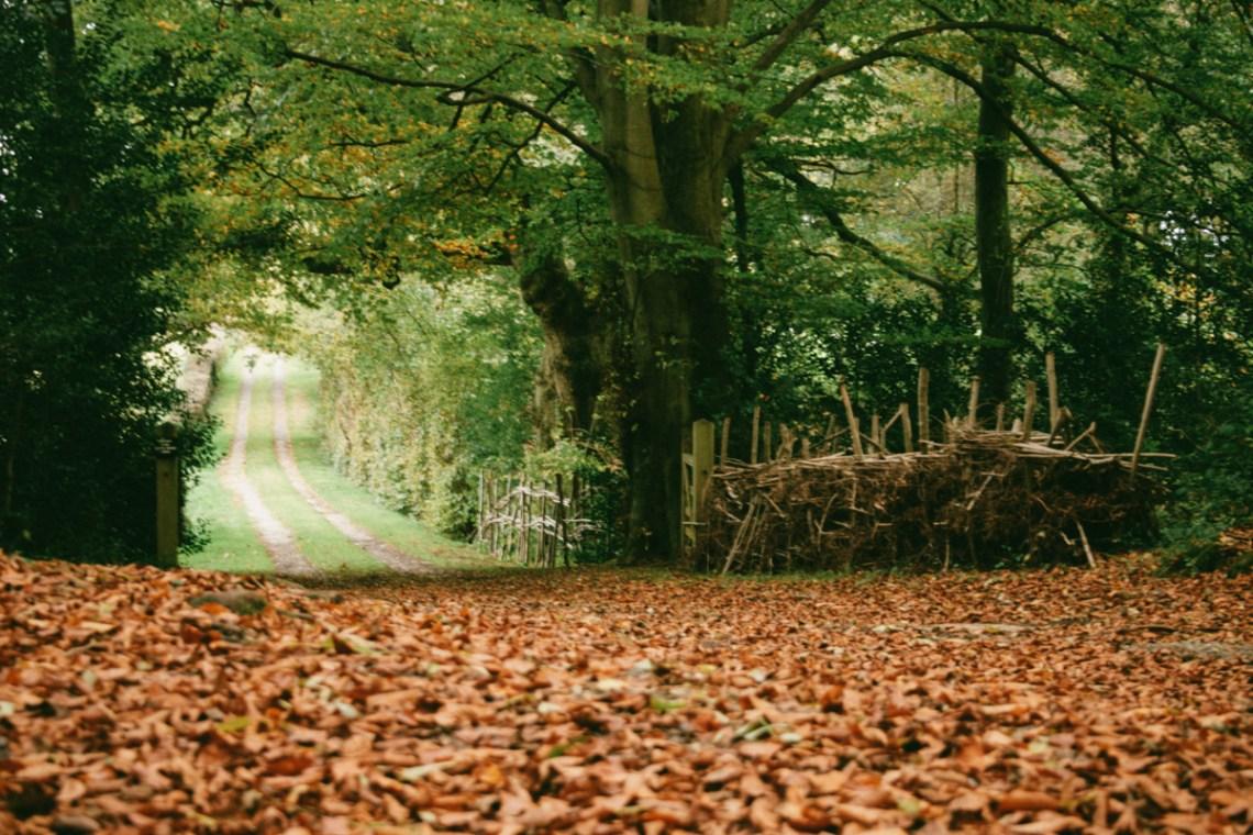 autumn walk, brockwood bottom, england