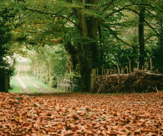 autumn walk, brockwood bottom, england