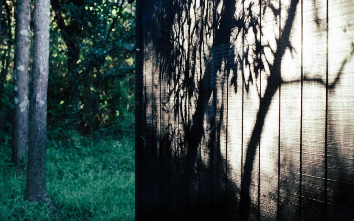 leonie-wise-tree-stories