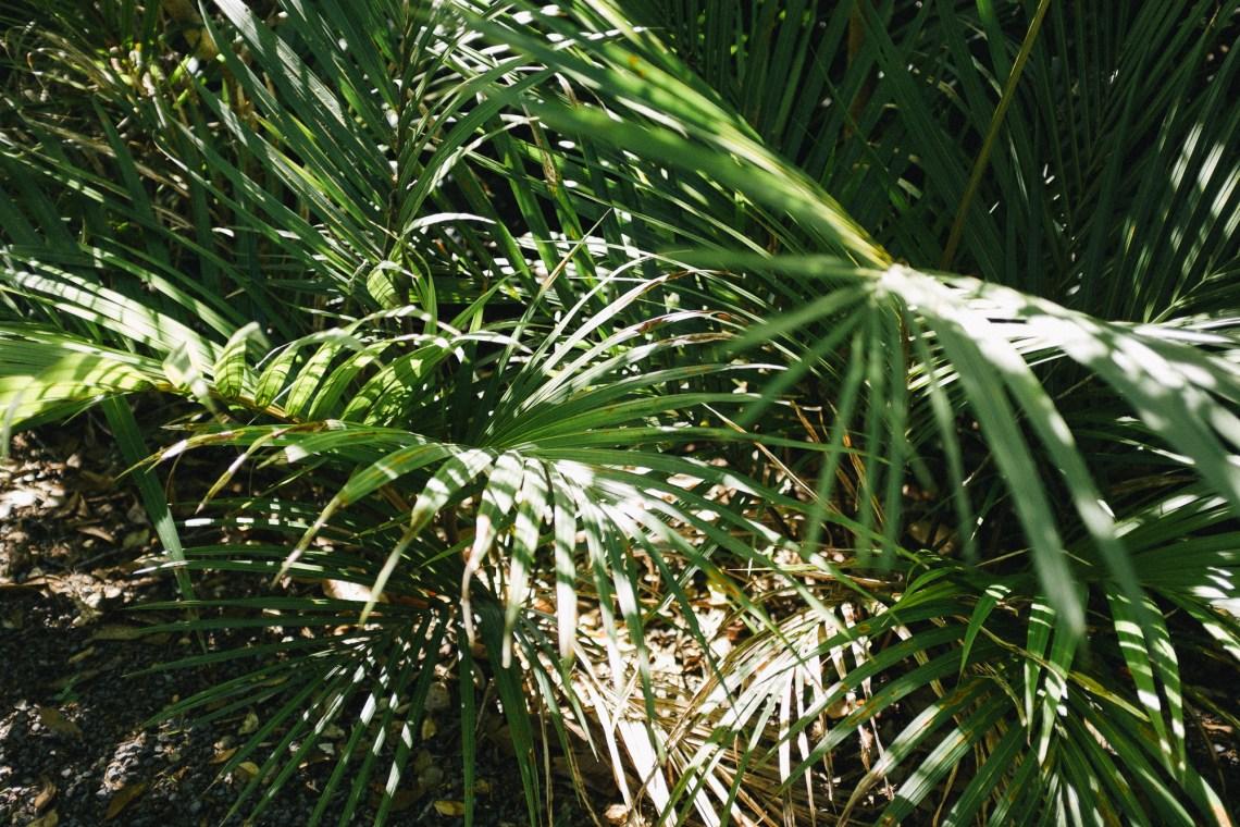 Ferns by leonie wise