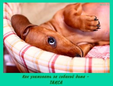 Как ухаживать за собакой дома