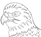 Adler « Cliparts