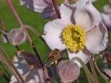 Blume – Biene 7