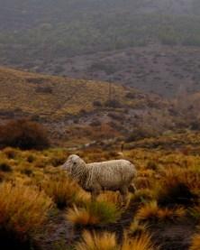 Over-grazzing, Junín de los Andes, Neuquén, Argentina