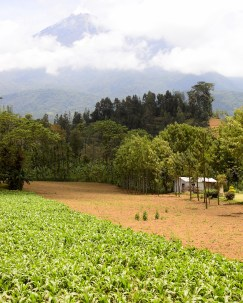 Climbing agriculture, Meru, Tanzania