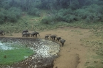 Watering hole, Mountain Lodge