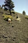 Arizona, volcanic ash mountain