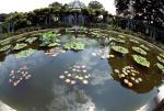 Old Westbury Gardens