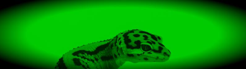 Leopard Gecko Two Heads