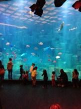 Visite L Aquarium De Paris Le Monde Leopask