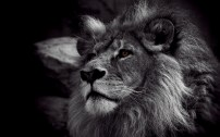leone14