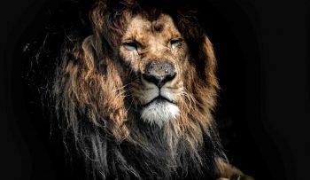 Leos2go leijona