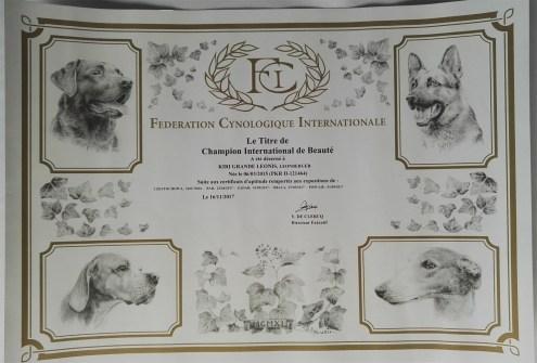 KIRI_Grande_Leonis_INTCH_diploma